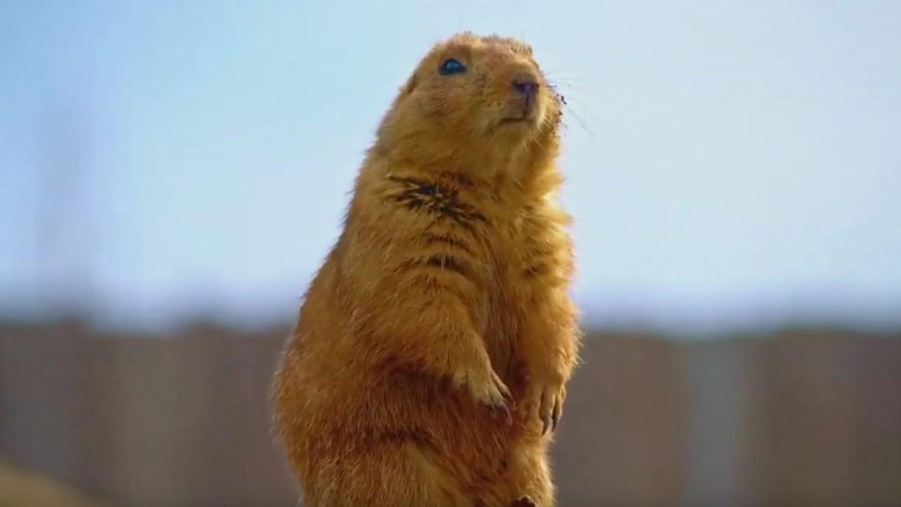 St. Louis Zoo macht lustig und liebenswert anzeigen #BringTheStlZooToYou