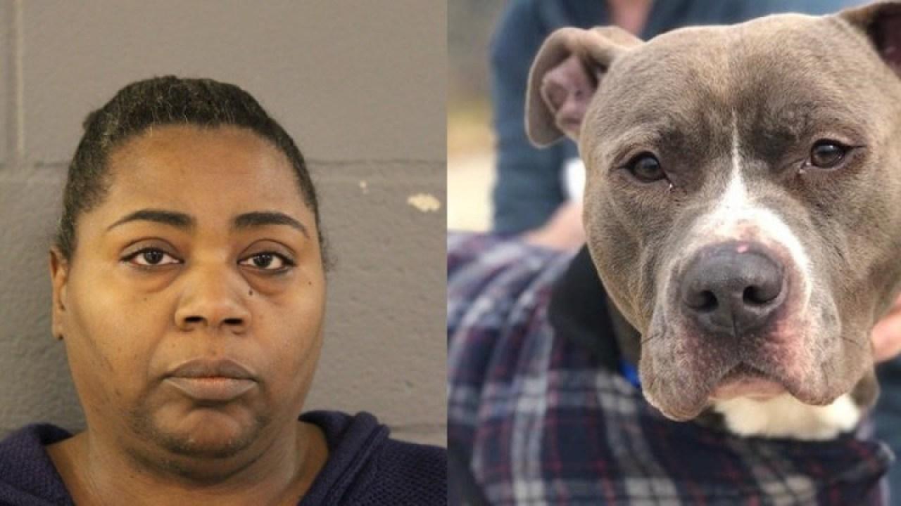 Illinois Frau berechnet nach Hund gefunden in Müllsack