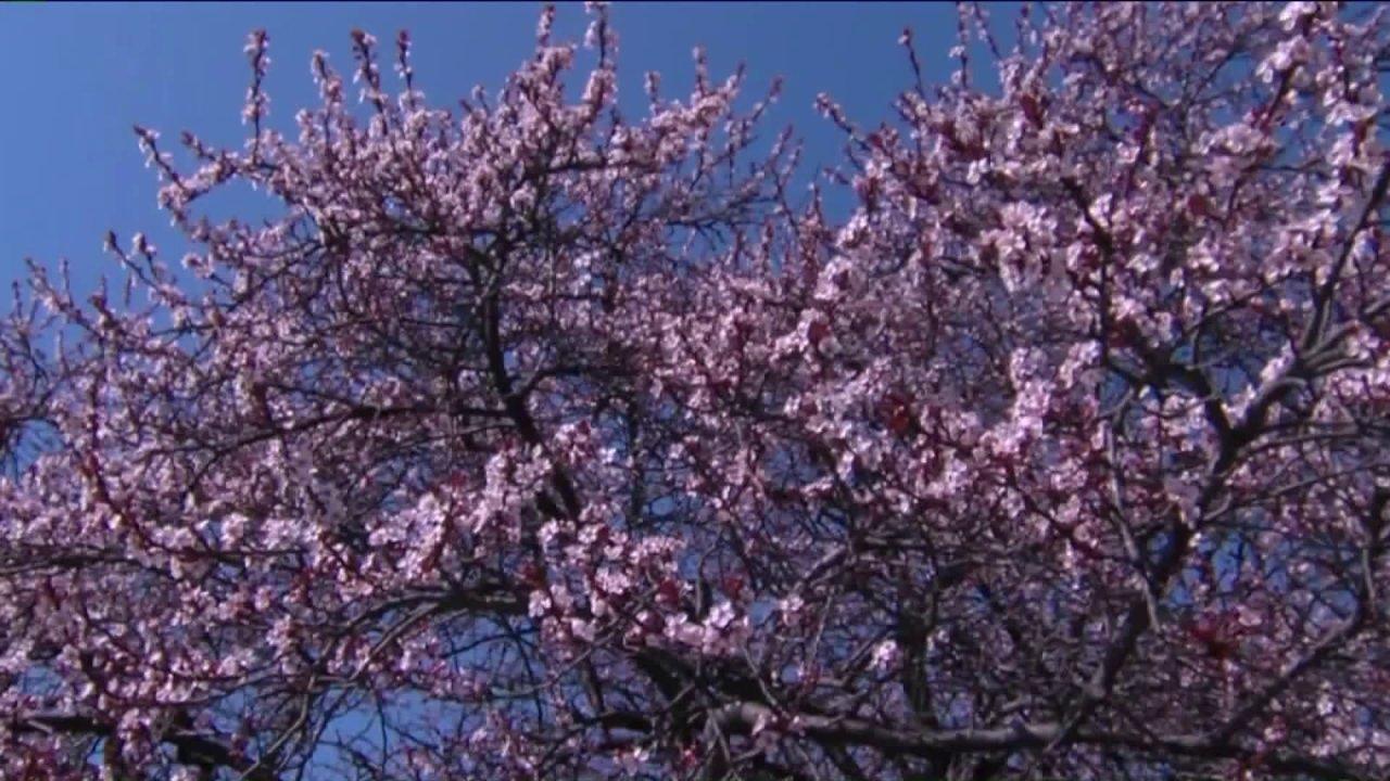 Yang menderita alergi musiman atau bisa lebih serius?