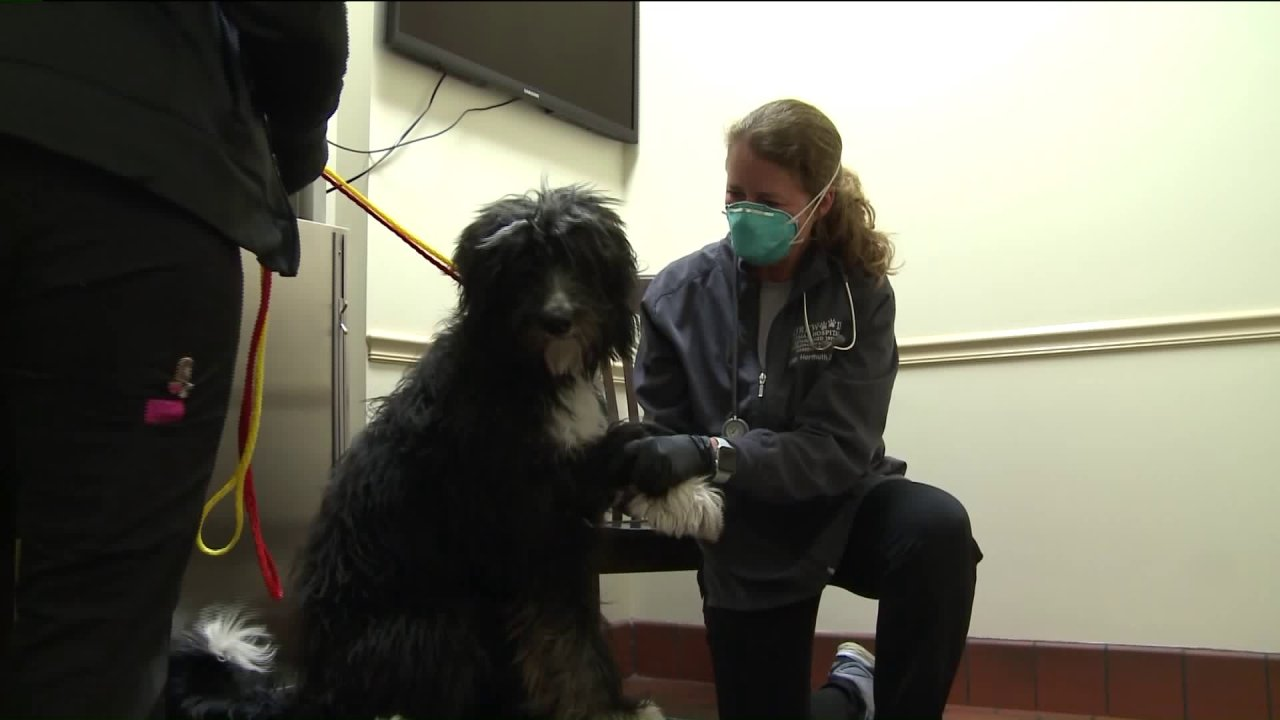 Dokter hewan setempat di tepi jalan pickup untuk perawatan hewan peliharaan