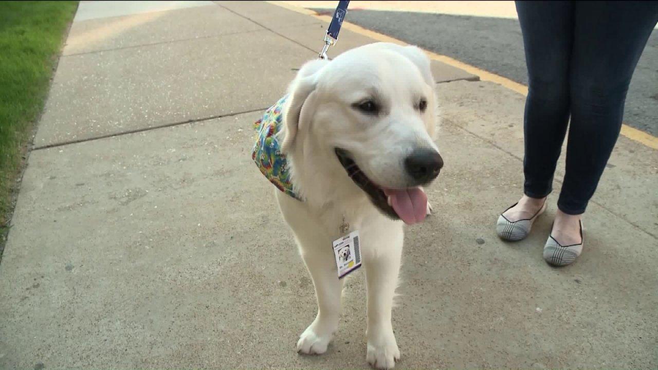 SLU rumah Sakit menambah staf baru dukungan anjing untuk stres-out karyawan