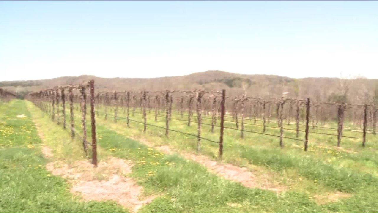 Bagaimana Missouri perkebunan anggur beradaptasi selama pandemi