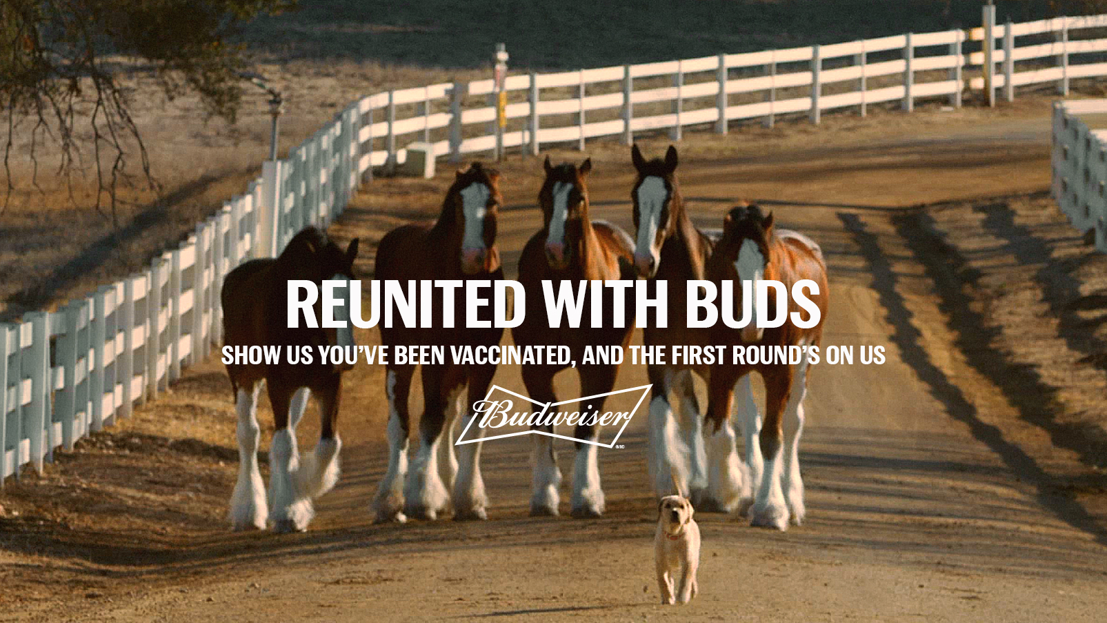 Budweiser free beer COVID